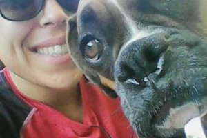 Photo #3: CERTIFIED DOG GROOMER/STYLIST