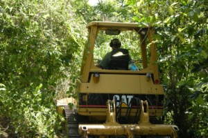 Photo #24: LAMM'S AGRICULTURAL BULLDOZING - LAND CLEARING AND ORCHARD