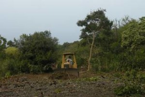 Photo #19: LAMM'S AGRICULTURAL BULLDOZING - LAND CLEARING AND ORCHARD