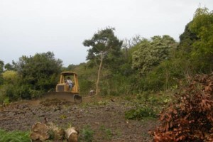 Photo #18: LAMM'S AGRICULTURAL BULLDOZING - LAND CLEARING AND ORCHARD
