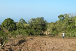 Photo #17: LAMM'S AGRICULTURAL BULLDOZING - LAND CLEARING AND ORCHARD