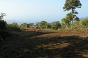 Photo #16: LAMM'S AGRICULTURAL BULLDOZING - LAND CLEARING AND ORCHARD