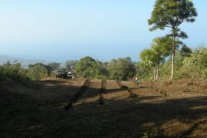 Photo #15: LAMM'S AGRICULTURAL BULLDOZING - LAND CLEARING AND ORCHARD