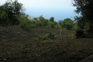 Photo #14: LAMM'S AGRICULTURAL BULLDOZING - LAND CLEARING AND ORCHARD