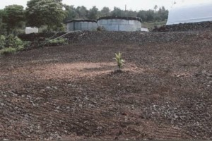 Photo #9: LAMM'S AGRICULTURAL BULLDOZING - LAND CLEARING AND ORCHARD