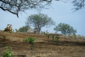 Photo #7: LAMM'S AGRICULTURAL BULLDOZING - LAND CLEARING AND ORCHARD
