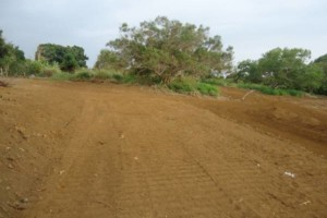 Photo #3: LAMM'S AGRICULTURAL BULLDOZING - LAND CLEARING AND ORCHARD