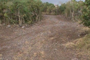 Photo #1: LAMM'S AGRICULTURAL BULLDOZING - LAND CLEARING AND ORCHARD