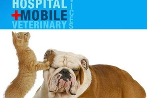 Photo #3: At Home Animal Hospital offers Quarantine & Direct Release Services