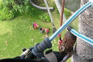 Photo #12: Tree trimming by Free lance Tree climber