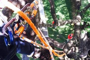 Photo #9: Tree trimming by Free lance Tree climber