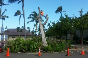 Photo #1: Tree trimming, Tree removal, stump grinding