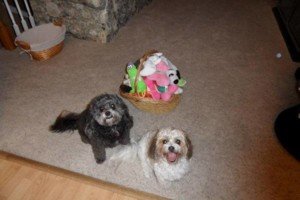 Photo #1: Pet sitting in Wailea, Maui Meadows, Kihei, and surrounding areas.