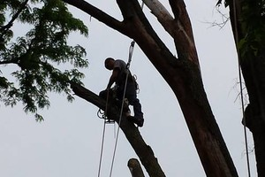 Photo #1: Tree Removal & Trimming at a great price