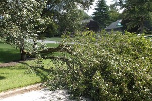 Photo #8: FALLEN / DOWNED TREES & LIMBS CUT UP & REMOVED