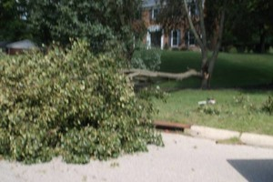 Photo #7: FALLEN / DOWNED TREES & LIMBS CUT UP & REMOVED