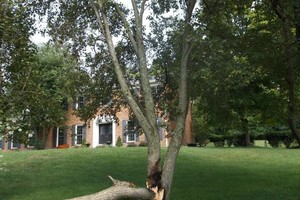 Photo #6: FALLEN / DOWNED TREES & LIMBS CUT UP & REMOVED
