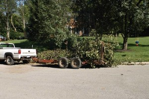 Photo #5: FALLEN / DOWNED TREES & LIMBS CUT UP & REMOVED