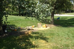 Photo #3: FALLEN / DOWNED TREES & LIMBS CUT UP & REMOVED