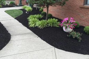 Photo #6: CME Lawn Care & Landscaping