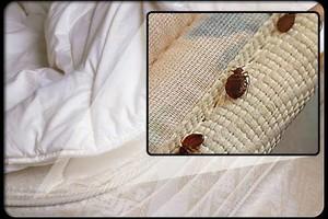 Photo #1: Do you have a bedbug problem?  BEDBUG BUSTERS USA