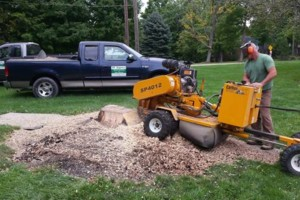 Photo #2: BT Express. Stump grinding, Tree Service, and Brush removal
