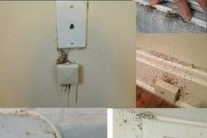 Photo #4: Bedbugs are eradicated. Call Shield Termite & Pest Control