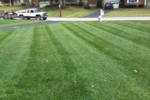 Photo #6: Grass cutting/ mowing. LOW price/ QUALITY work!