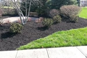 Photo #1: Grass cutting/ mowing. LOW price/ QUALITY work!