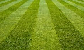 Photo #1: Matts Lawn service - grass cutting, weed spraying, fertilizing...