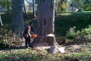 Photo #2: TOM MATTINGLY'S EXPERT TREE SERVICE