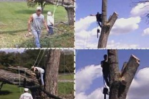 Photo #1: TOM MATTINGLY'S EXPERT TREE SERVICE