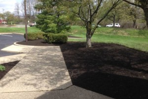 Photo #1: CREATIVE OUTDOOR SERVICE. Courtyard/Mulch/Mowing