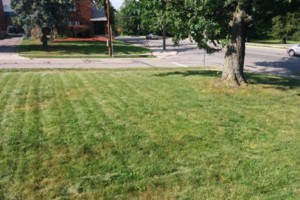 Photo #4: Green Kutz Lawn Care/Weed Control