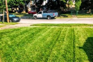 Photo #3: Green Kutz Lawn Care/Weed Control