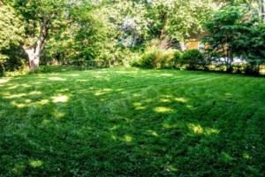 Photo #2: Green Kutz Lawn Care/Weed Control