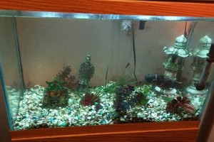 Photo #1: Aquarium Cleaning at 50 dollars for one tank