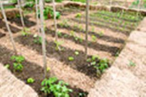 Photo #13: Veggie Gardens The Easy Way