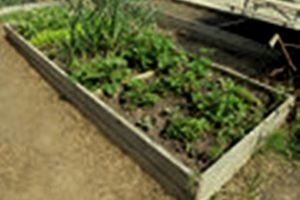 Photo #10: Veggie Gardens The Easy Way