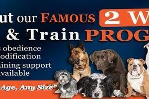 Photo #1: Dog Training Off Leash Laredo K9 Training