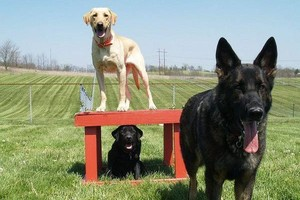 Photo #8: Home Dog Training at the comfort of your Home !