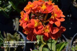 Photo #1: Summer Yard Inprovement Services By L&M Management Service's