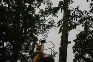 Photo #1: POTTER TREE SERVICE. Tree Removal N Trimming