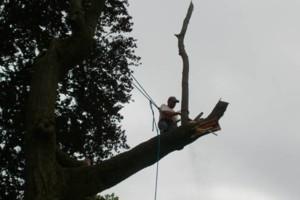 Photo #5: NO BULL TREE SERVICE