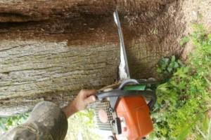 Photo #4: NO BULL TREE SERVICE