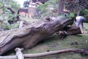 Photo #3: NO BULL TREE SERVICE