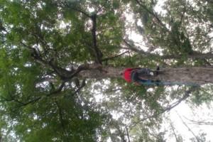 Photo #2: NO BULL TREE SERVICE
