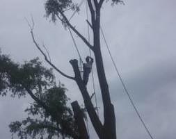 Photo #1: NO BULL TREE SERVICE