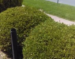 Photo #4: Landscaping and Lawn care - mow, mulch, plant flowers...