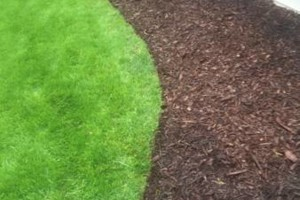 Photo #1: Best Price Landscaping
